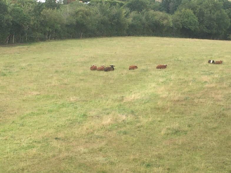04-08 CWA Cows